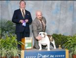 Hercules - Winners Dog - MAJOR - Tallahassee Florida