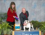 Hercules - Winners Dog - Tallahassee Florida